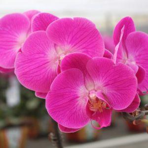Уход за орхидеями: раскрываем секреты