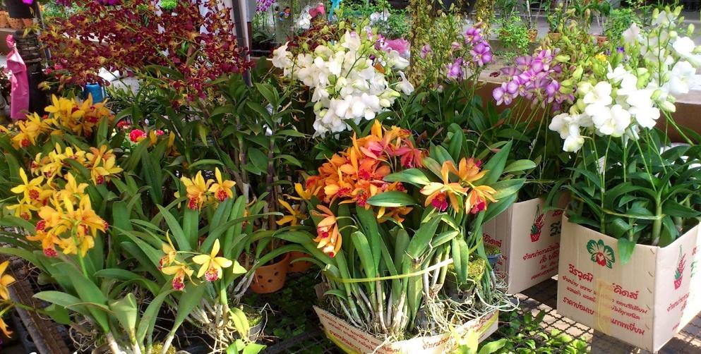 Редкие и необычные виды орхидей: топ-10 самых красивых