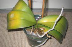 Обзор самых распростроненных болезней орхидей