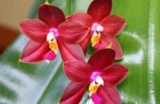 Виды удобрений, подходящих для орхидей, и способы их применения