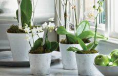 Какие горшки подойдут для орхидей