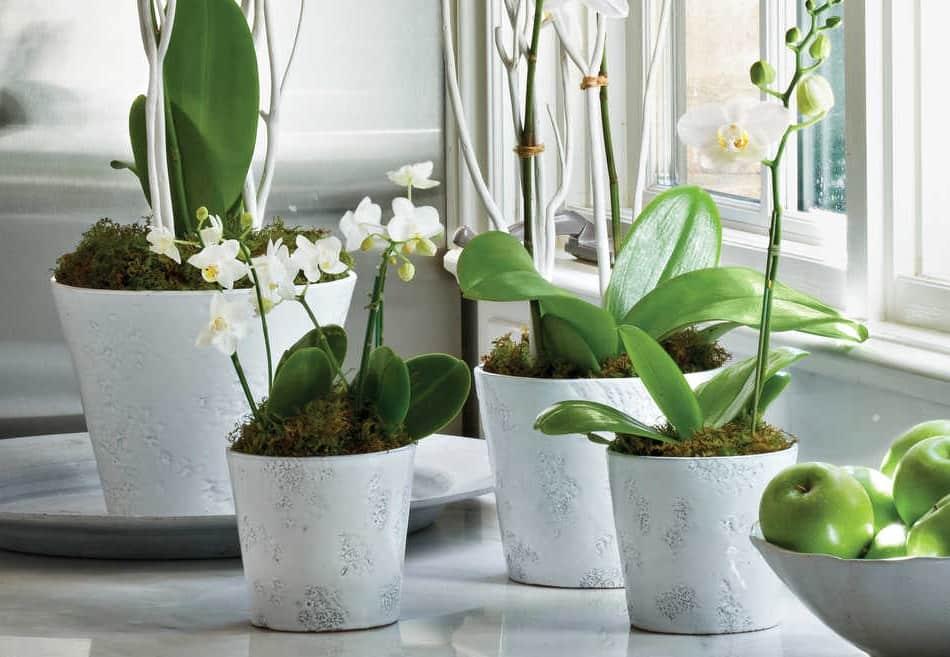 Разнообразные кашпо для орхидей