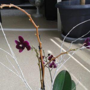 Как максимально безболезненно обрезать орхидею