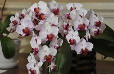 Орхидея отцвела: секреты и правила ухода