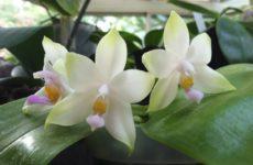 Как заставить зацвести орхидею: секреты и правила