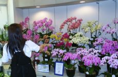 Как выбрать орхидею: секреты и правила